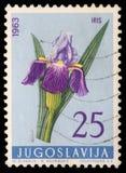 Stamp printed in Yugoslavia shows iris Stock Photography