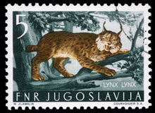 Stamp printed in Yugoslavia shows the Lynx Stock Photos