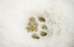 The stamp on the snow. Royalty Free Stock Photos
