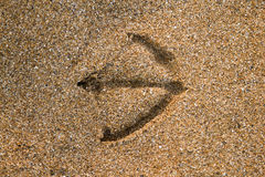 Stampa del gabbiano nella sabbia Fotografia Stock