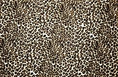 Stampa del leopardo Fotografie Stock