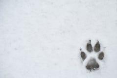 Stampa del piede del cane in una neve Fotografia Stock