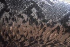 stampa del serpente 3D, fondo e coloritura del pitone sulla base del tessuto, fondo astratto fotografie stock