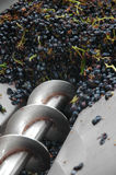 Stampa dell'uva del raccolto dell'uva per produzione vinicola immagini stock libere da diritti