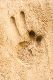 Stampa della mano sui precedenti di struttura della spiaggia di sabbia Fotografie Stock Libere da Diritti