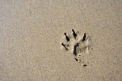 Stampa della zampa del cane nella spiaggia Fotografie Stock Libere da Diritti