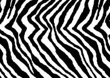 Stampa della zebra Immagini Stock