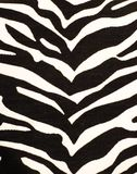 Stampa della zebra Fotografia Stock