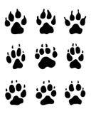 Stampa delle zampe dei cani Fotografie Stock