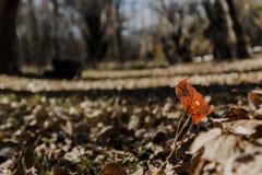Stampa di autunno Ritratto della natura morta fotografia stock