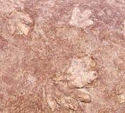 Stampa (duckbilled) del piede del dinosauro di Hadrosaurian in Arizona immagine stock libera da diritti