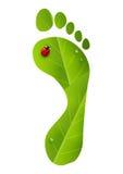 Stampa verde del piede con la coccinella Fotografie Stock Libere da Diritti