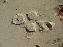 Stampe del piede che vanno il modo opposto Fotografia Stock Libera da Diritti