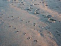 Stampe del piede del gabbiano in sabbia Fotografia Stock Libera da Diritti