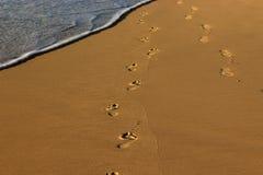 Stampe del piede nelle sabbie della spiaggia Fotografie Stock Libere da Diritti