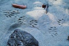 Stampe del piede sulla spiaggia Fotografia Stock