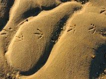 Stampe dell'uccello nella sabbia Fotografia Stock Libera da Diritti