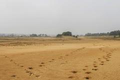 Stampe della scarpa del cavallo nella sabbia Fotografia Stock Libera da Diritti