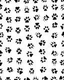 Stampe della zampa del cane Fotografie Stock Libere da Diritti