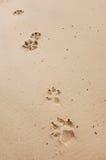 Stampe della zampa del cane Immagine Stock Libera da Diritti