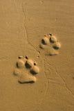 stampe della zampa del cane Fotografia Stock