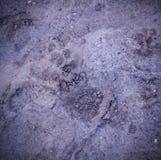 Stampe della zampa del cane di Vignetted nel fango fondo, naturale fotografie stock libere da diritti