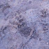 Stampe della zampa del cane nel fango fondo, naturale fotografia stock libera da diritti