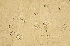 Stampe delle zampe del cane nella sabbia Immagine Stock