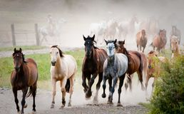Stampede of multi-colored horses royalty free stock photo