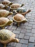 Stampeding turtles Stock Photography