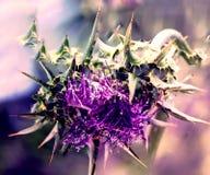 Stampfen Sie purpurrote und grüne Blume lizenzfreie stockfotografie