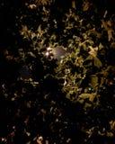 Stampo delle luci Fotografie Stock