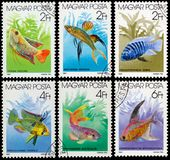 Stamps printed in HUNGARY shows aquarium fishes Royalty Free Stock Photos