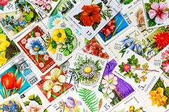 Stamps printed in USSR shows flowers royalty free stock image