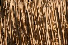 Stamtextur för torkat gräs Arkivfoto