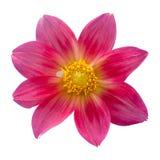 stan dalia kwiaty naturalnej czerwony Zdjęcia Stock