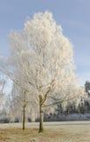Stanborough冬天结构树 免版税库存图片