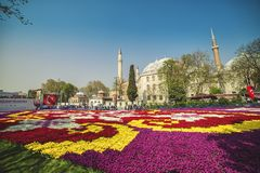 World`s largest Tulip Carpet in Istanbul royalty free stock images