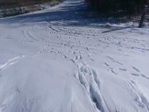 Stanchi le piste e le piste dell'animale nella neve dopo la bufera di neve immagini stock libere da diritti