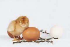 Stanco del pollo Fotografie Stock Libere da Diritti