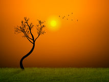 Stand alone beautiful morning Royalty Free Stock Images
