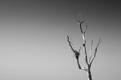 Stand alone dead tree. stock photos