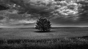 Stand alone tree. Its a lonely tree on a field in Hungary royalty free stock photography