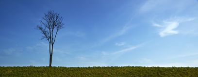 Stand alone tree without leaves Stock Image