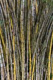 Stand of bamboo canes Stock Photography