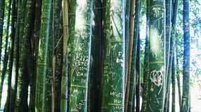Bamboo Graffiti 2. A stand of Bamboo shoots with etched graffiti Stock Photography