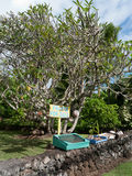 Stand der kleinen Frucht auf Hana Highway in Maui Lizenzfreies Stockfoto