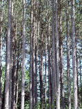 Stand des arbres photos stock
