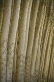 Stand des arbres de peuplier cultivés. Photos stock