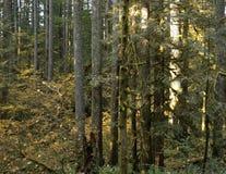 Stand des arbres le long d'un journal de hausse couvert de forêts Image libre de droits